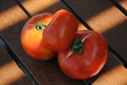 Real Tomatoes are like real friends they are never perfect